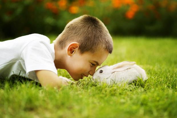 little boy plays with rabbit outdoors