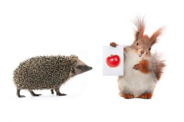squirrel and hedgehog with sheet for a text writing