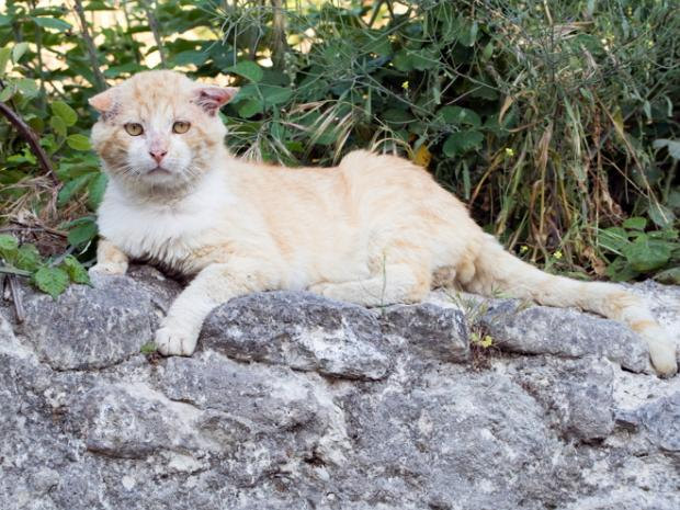 Male Alley Cat sat on a wall